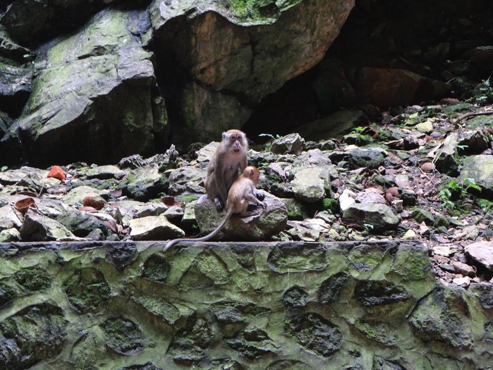 バトゥ洞窟内部にいた猿