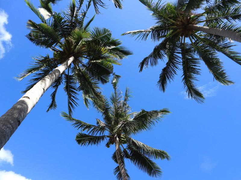 パラワン島のホスピタリティは高い!