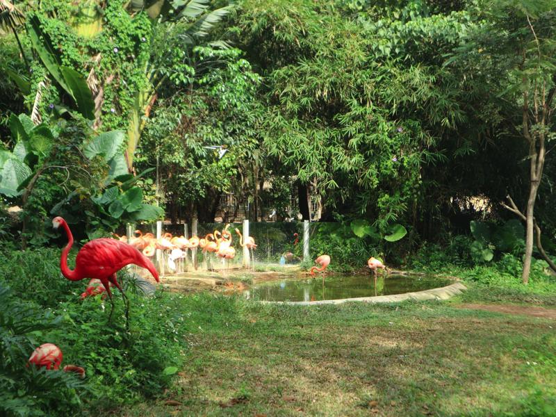 深セン野生動物園のフラミンゴ