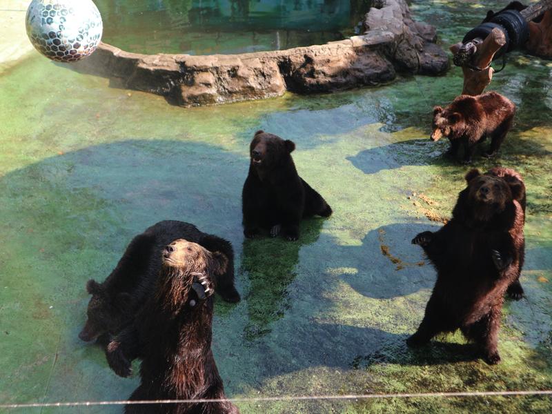 深セン野生動物園(熊の餌やりスポット)